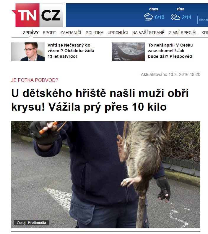 U dětského hřiště našli muži obří krysu Vážila prý přes 10 kilo tn.cz